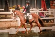 Summerhouse-Eqestrian-competition-2